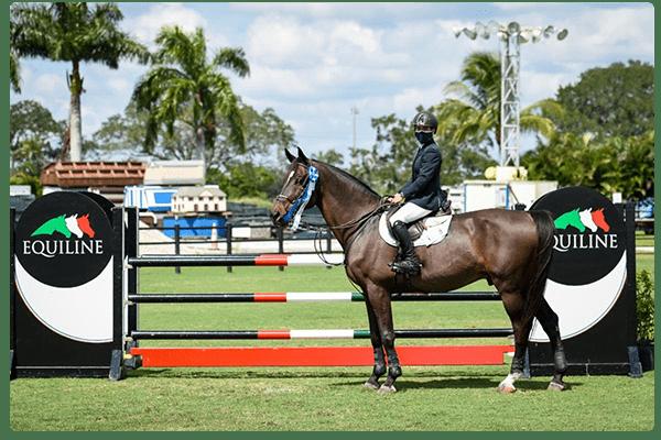 Equestrian Security Cameras