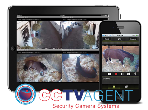 Horse Stable Camera